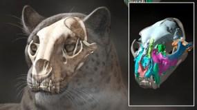 Didžiosios katės kaukolės liekanų paslaptis
