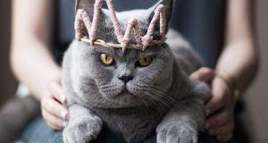 Ką atskleidė kačių elgsenos tyrimai?