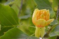 Tulpmedis 2