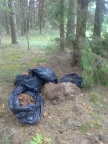 Užuot kompostą pasidarius namuose, lapai sukimšti į maišus ir išvežti i mišką