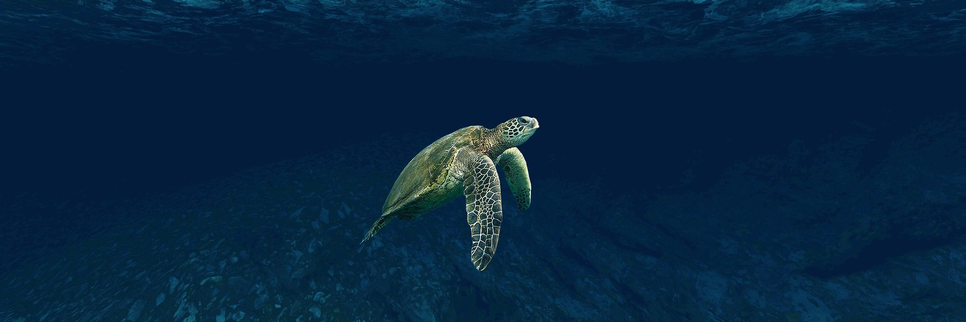 DNS Hijacking Group 'Sea Turtle' Hits Over 40 Firms