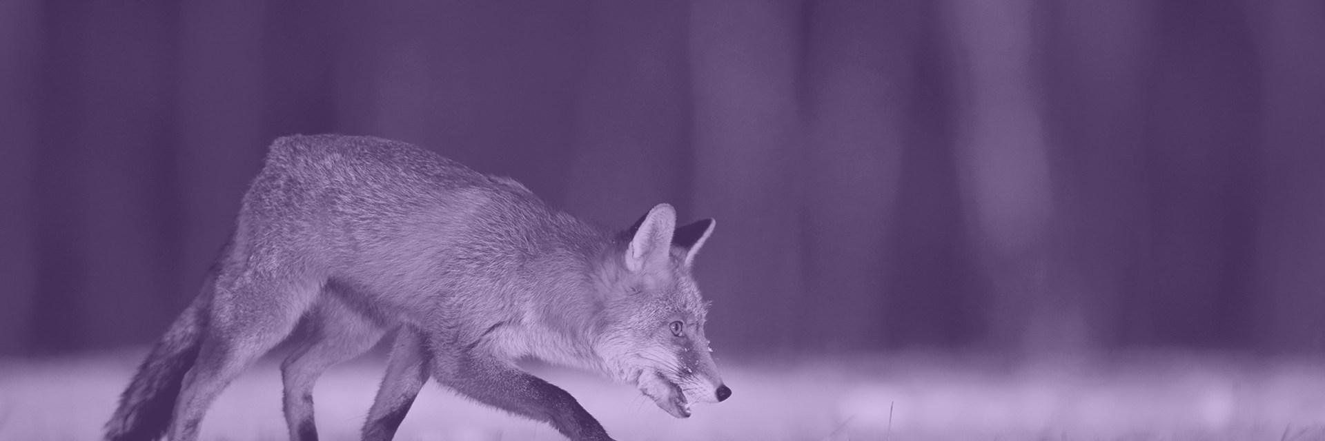Purple Fox Malware Now Evolves to Spread Itself Across Windows Machines