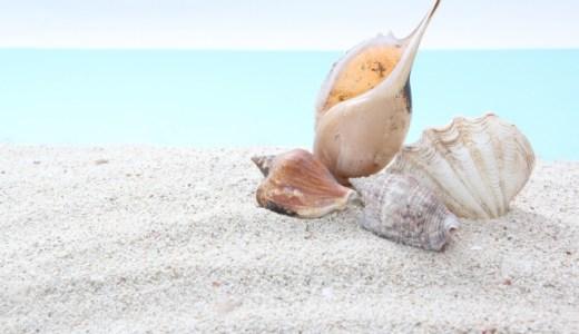 【貝殻の処分方法】ゴミとしての捨て方(分別・出し方)や廃棄方法を紹介!