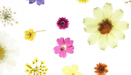 【押し花】100均(ダイソーなど)で乾燥シート、フィルムなどの材料を購入【キット・しおり・ラミネート】