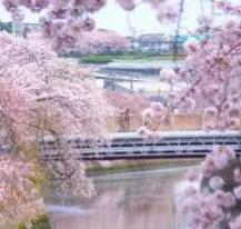 大岡川桜まつり2018アイキャッチ