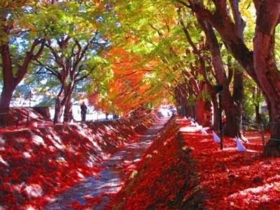 富士河口湖紅葉まつり2018の日程