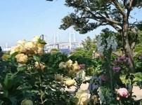 港の見える丘公園 バラ 見頃