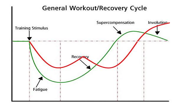 筋トレと回復のサイクル比較図