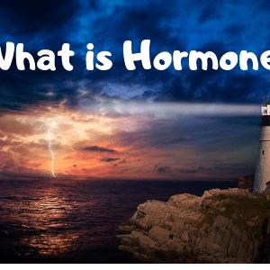 ホルモンとは?働きや種類をわかりやすく解説
