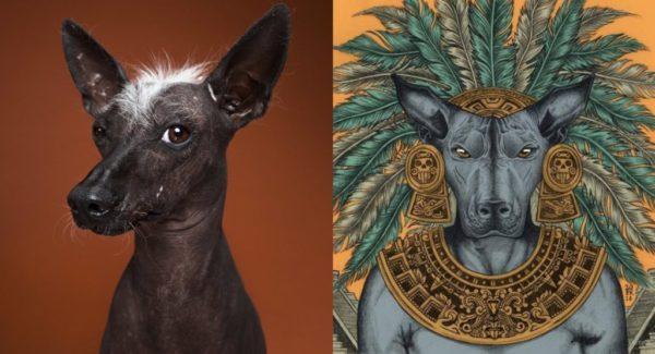 Ксолойцкуинтли или мексиканская безволосая собака