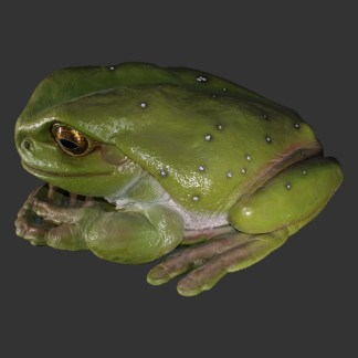 Frog 090012