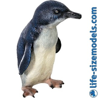 Fairy Penguin 3D Realistic Life Size Model