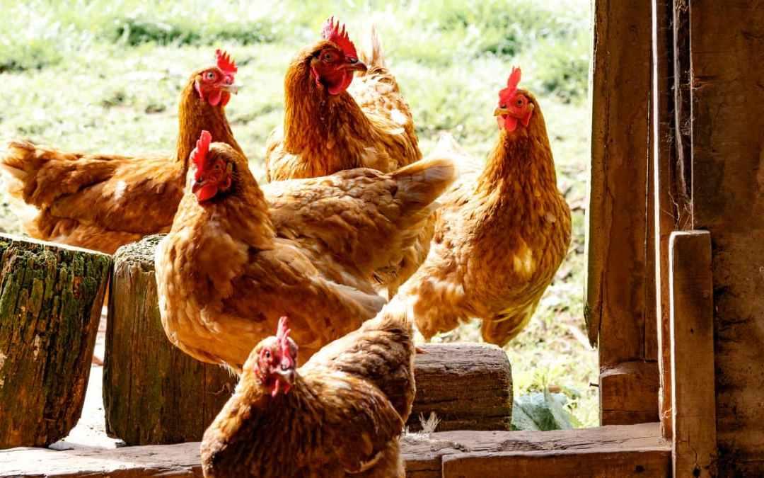 《田園三杯雞》健康均衡升級版的三杯雞!