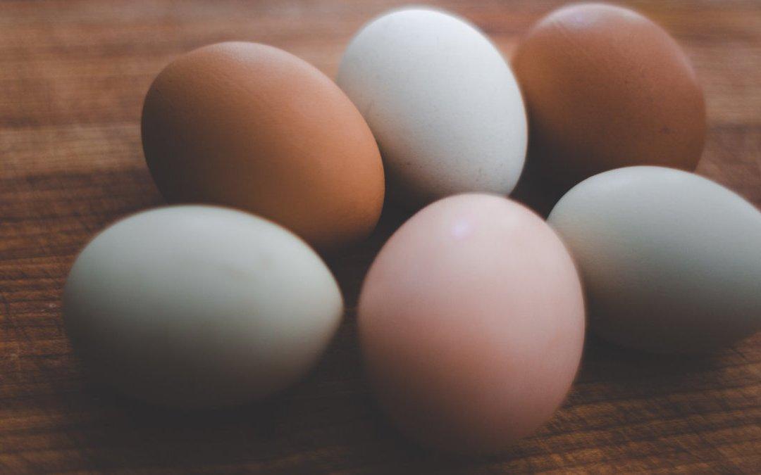 雞蛋殼和蛋黃的顏色會影響雞蛋的營養價值嗎?