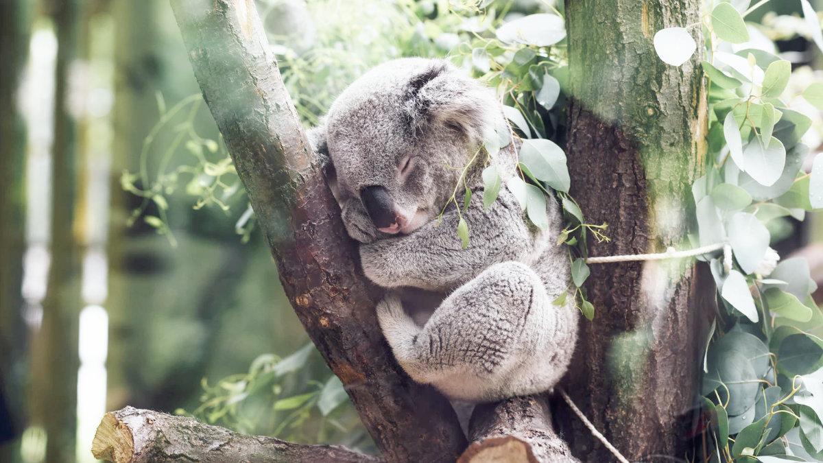 睡眠時間-中風風險