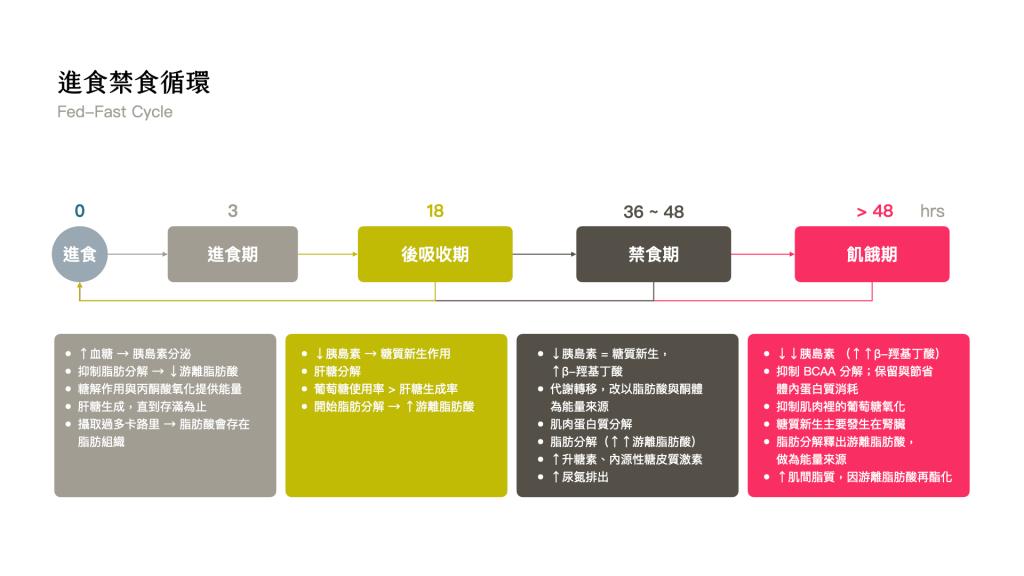168間歇性斷食-進食禁食循環