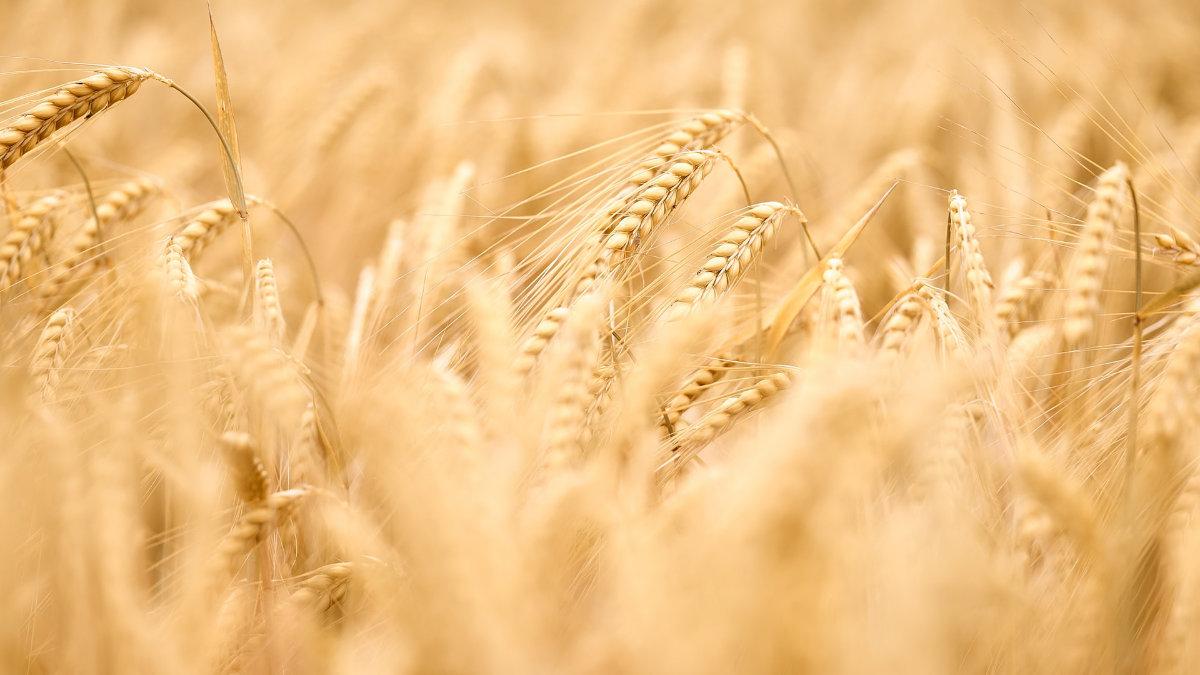 大麥-大麥飯-延緩血糖