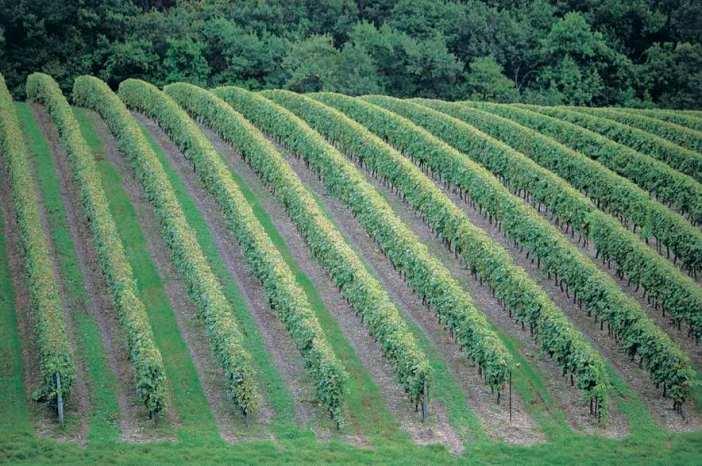 2681 Grande Champagne landscape copy