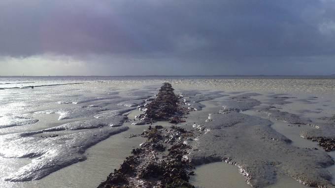 crassats baie aiguillon gisement huitres japonaises vasières