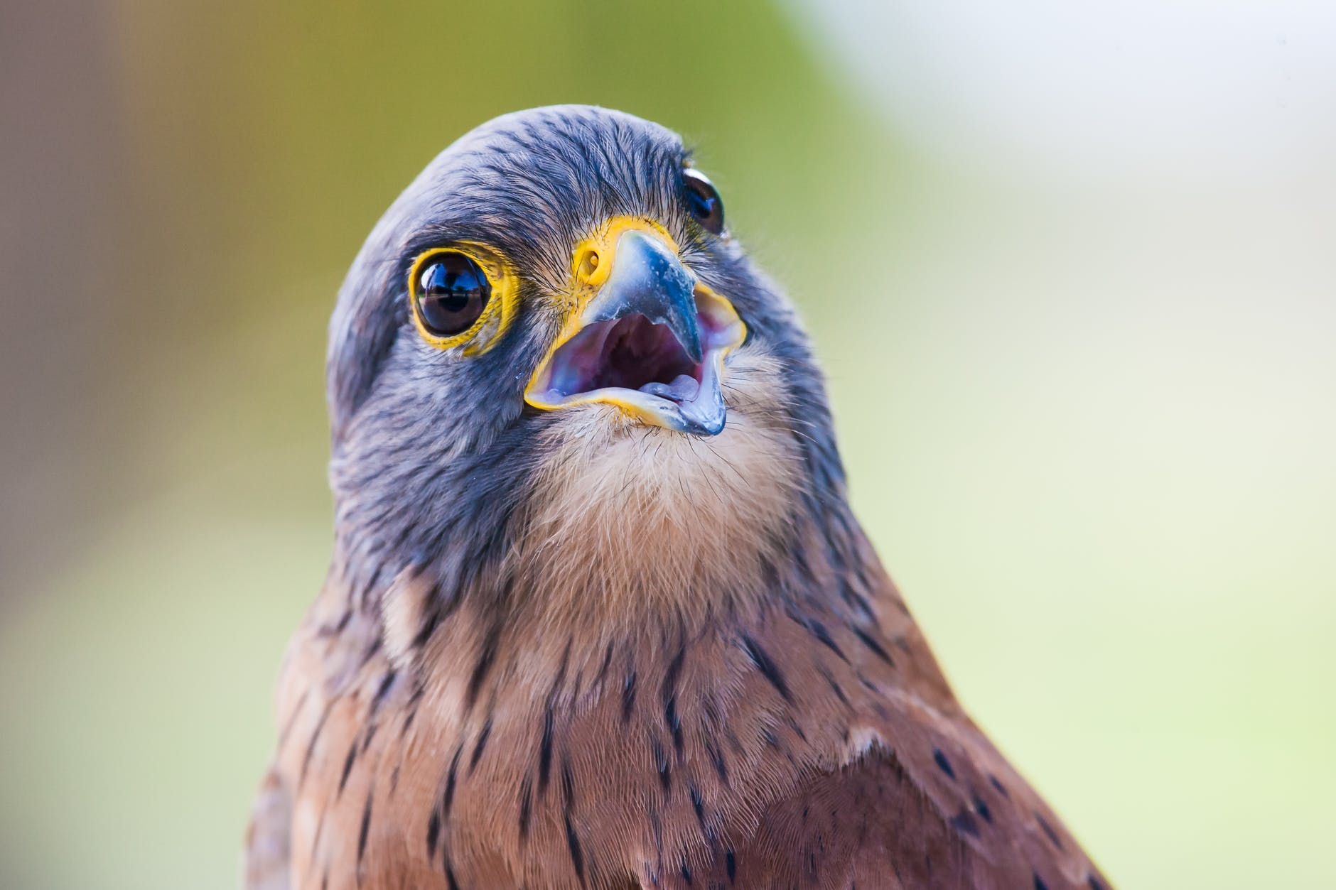 portrait photo of brown and gray bird