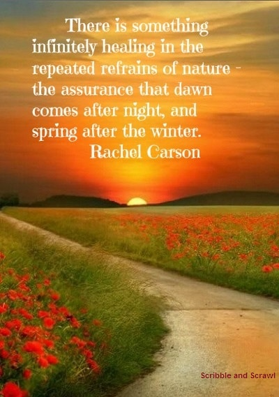 nature essay quotes Explore some of ralph waldo emerson, essay: nature best quotations and sayings on quotesnet -- such as 'to the body and mind which have been cramped by noxious work.