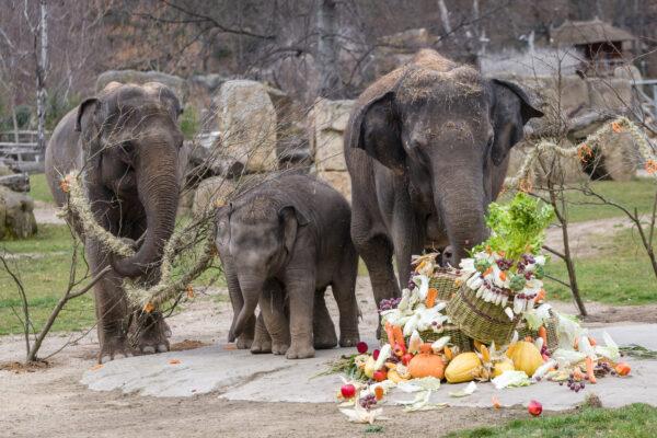 Zoo Praha 2 1 e1616864563265
