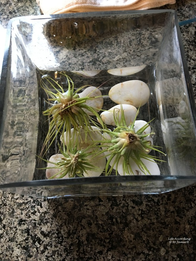 DIY Air Plant Terrarium Kit 1