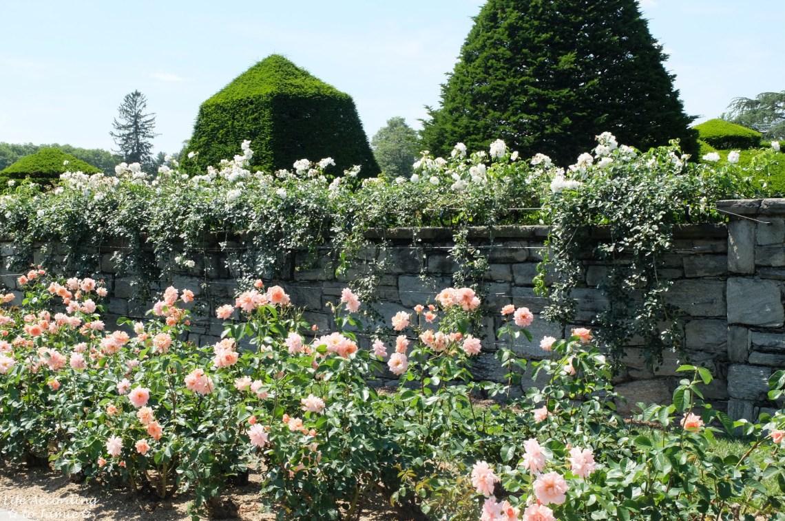 Longwood Gardens - Rose Garden