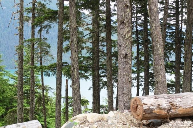Takshanuk Mountain Trail 6