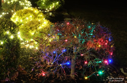 outdoor-christmas-lights