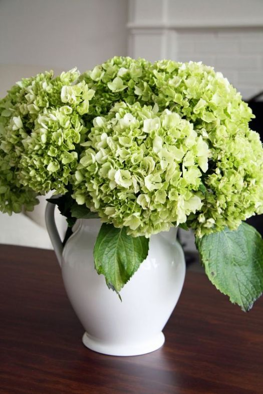 Green Hydrangea in White Pitcher