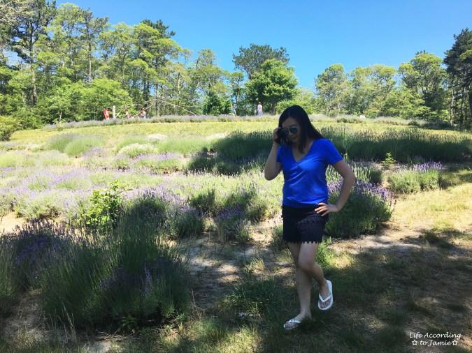 Cape Cod Lavender Farm 3