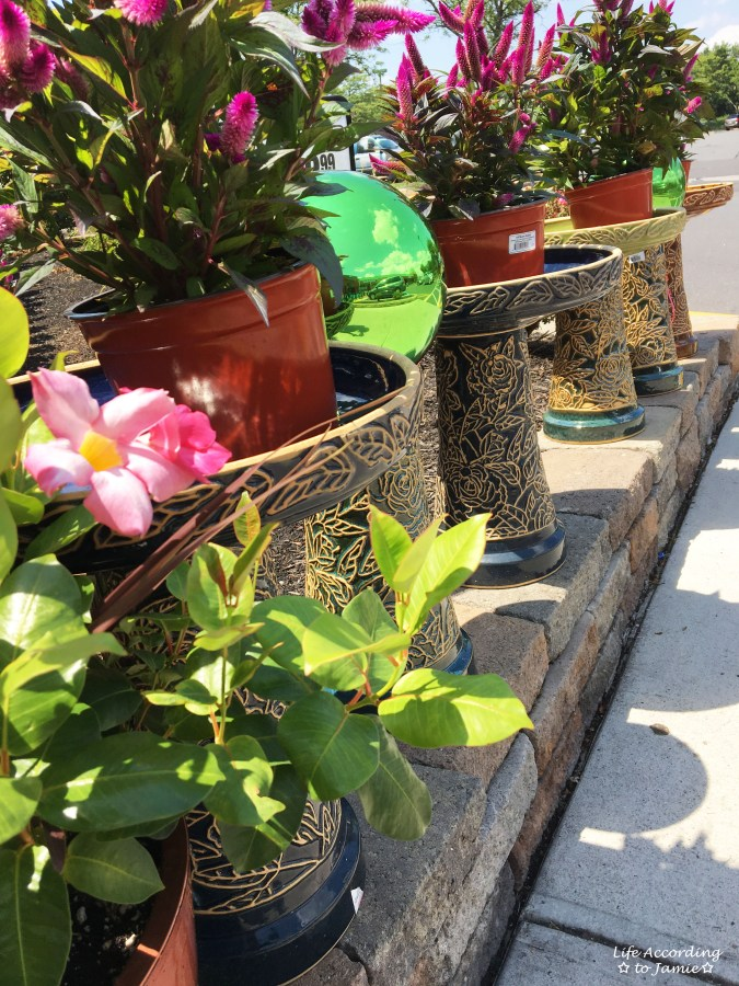 Bird Baths & Plants