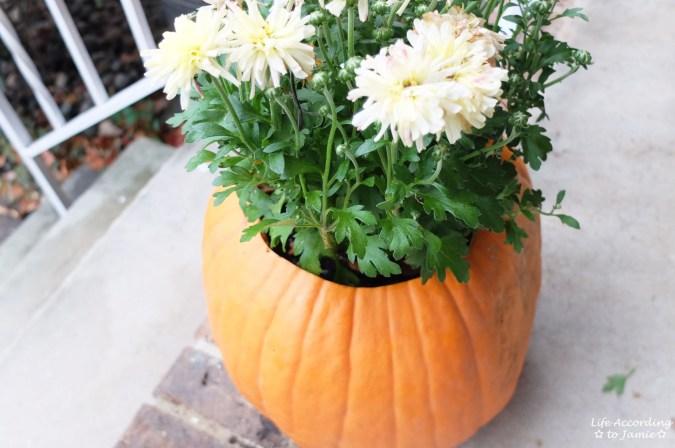 Pumpkin Planter + Mums 6