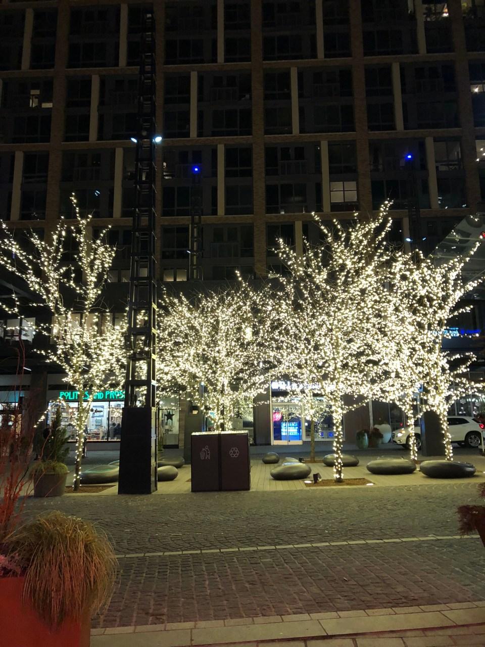 Washington DC - Twinkle Light Trees