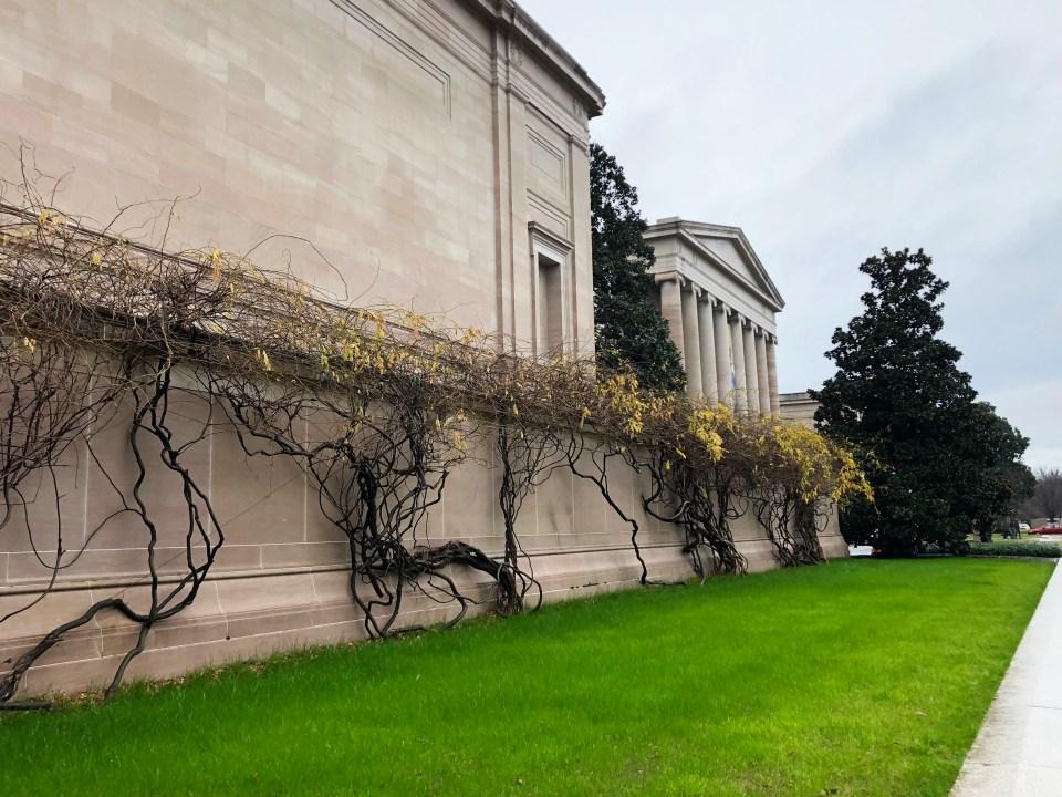 Washington DC - climbing plants