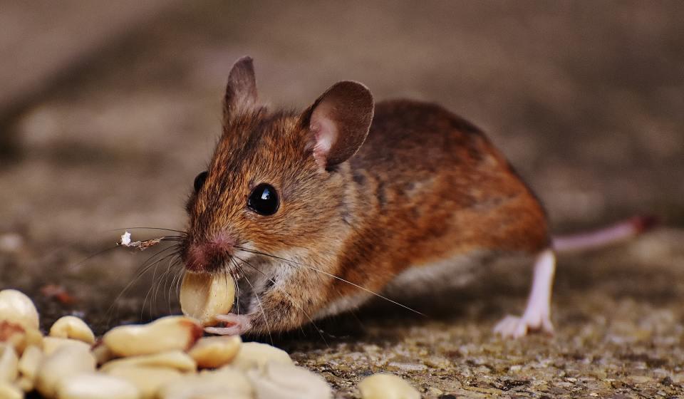 animal-blur-close-up-209112