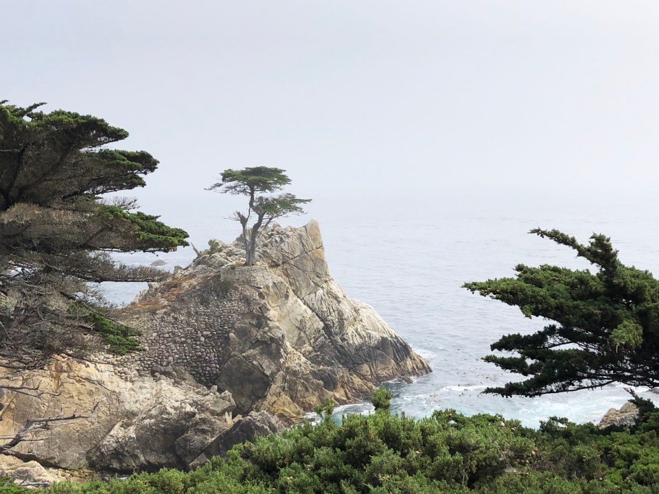 Lone Cypress - Pebble Beach 1