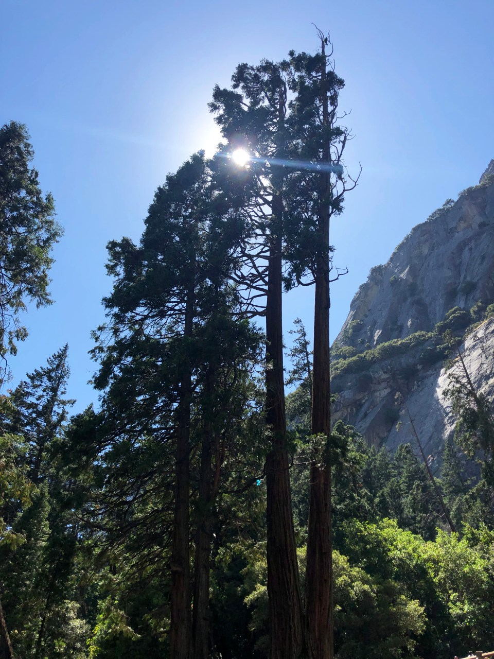 Yosemite National Park 13