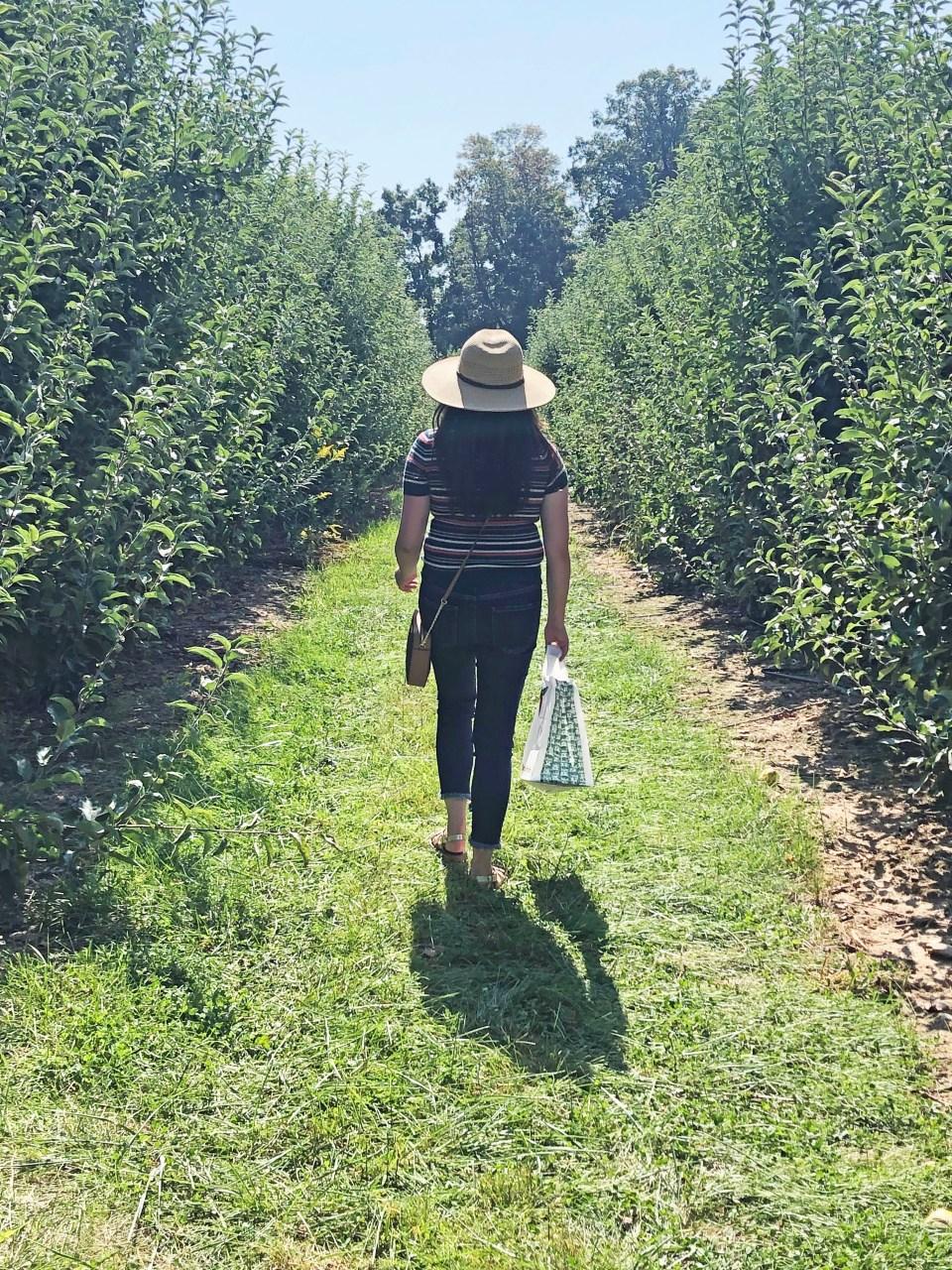Terhune Orchards 12