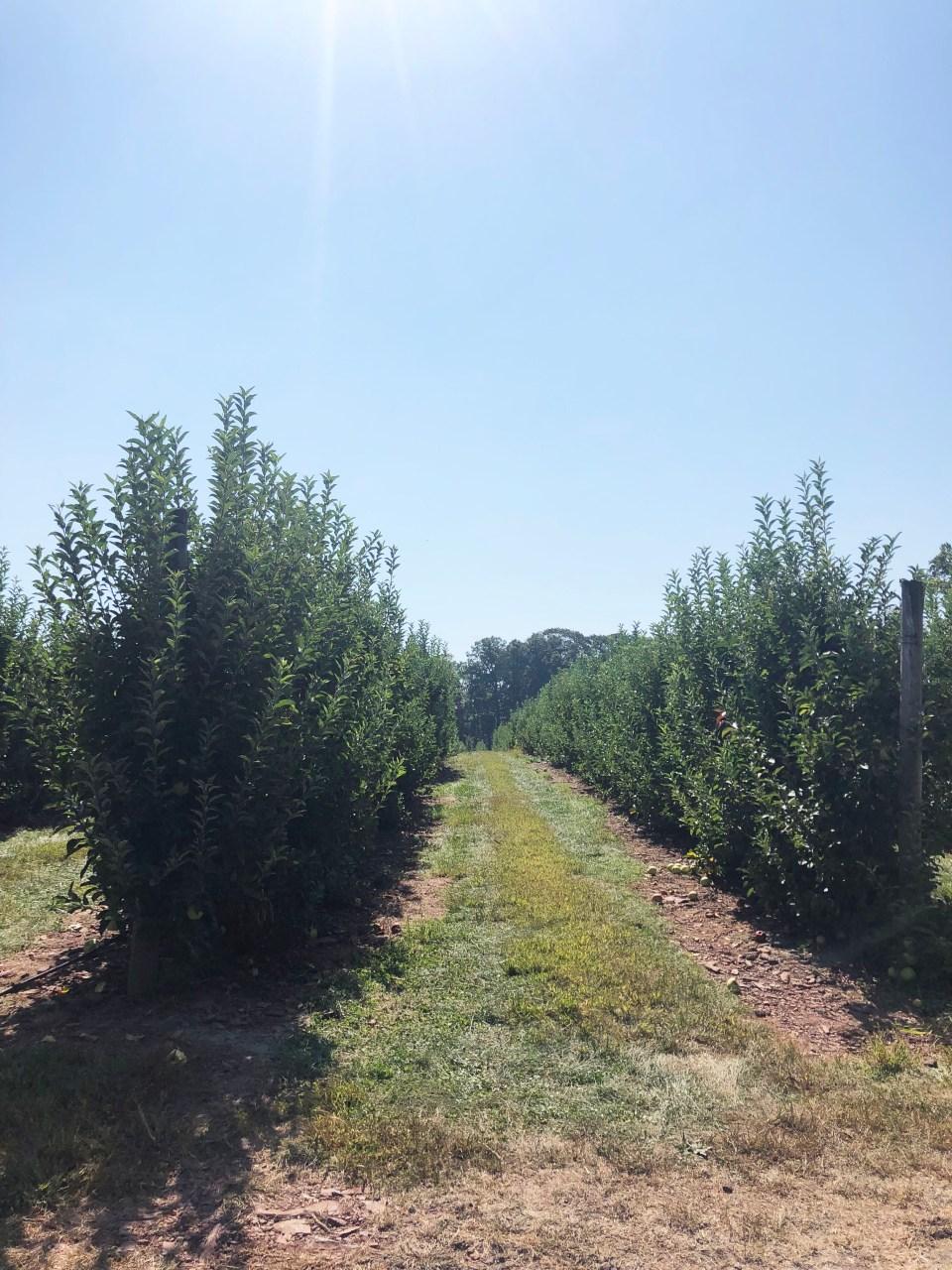 Terhune Orchards 7