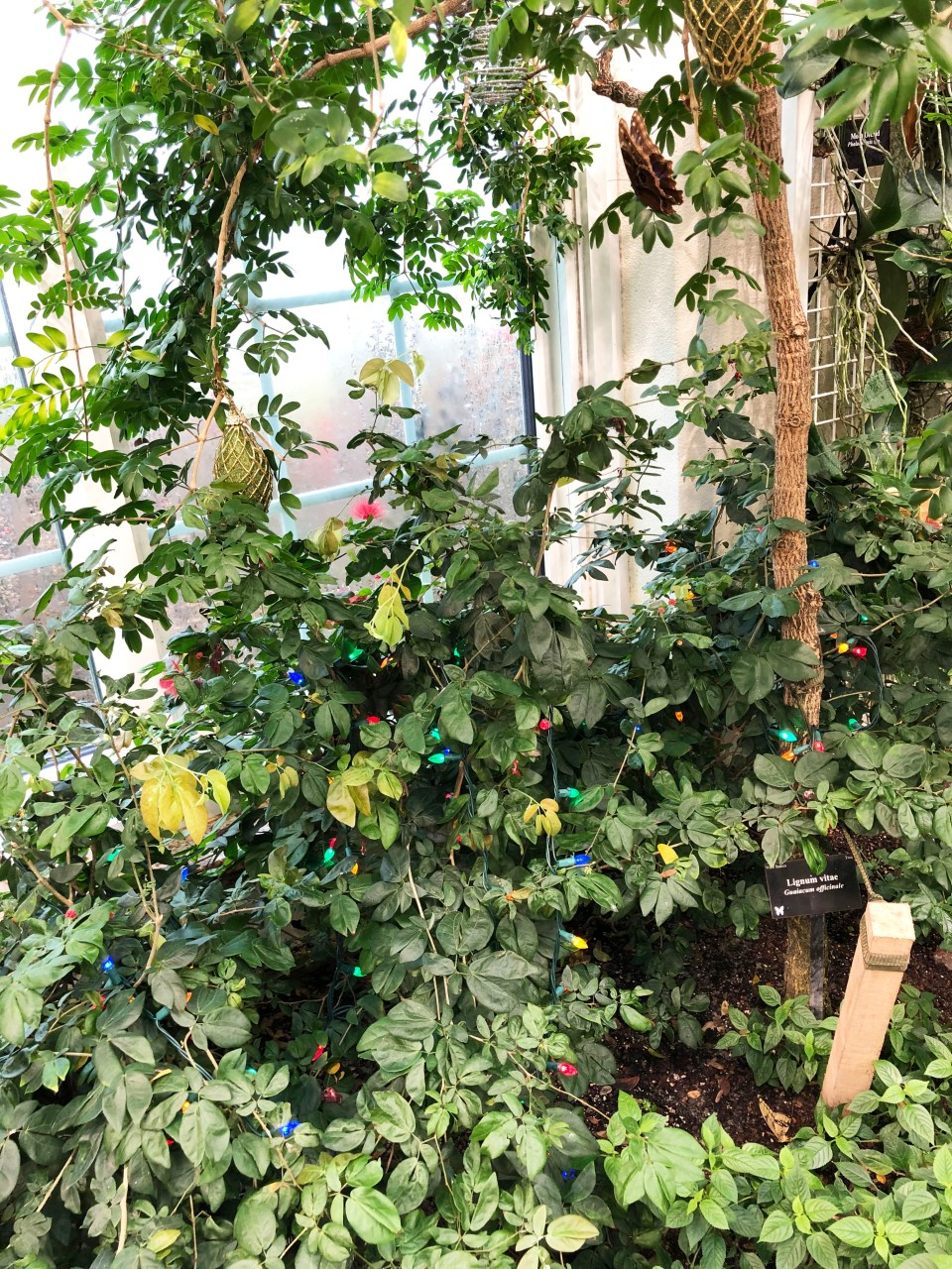 Hershey Gardens - Butterflies 1
