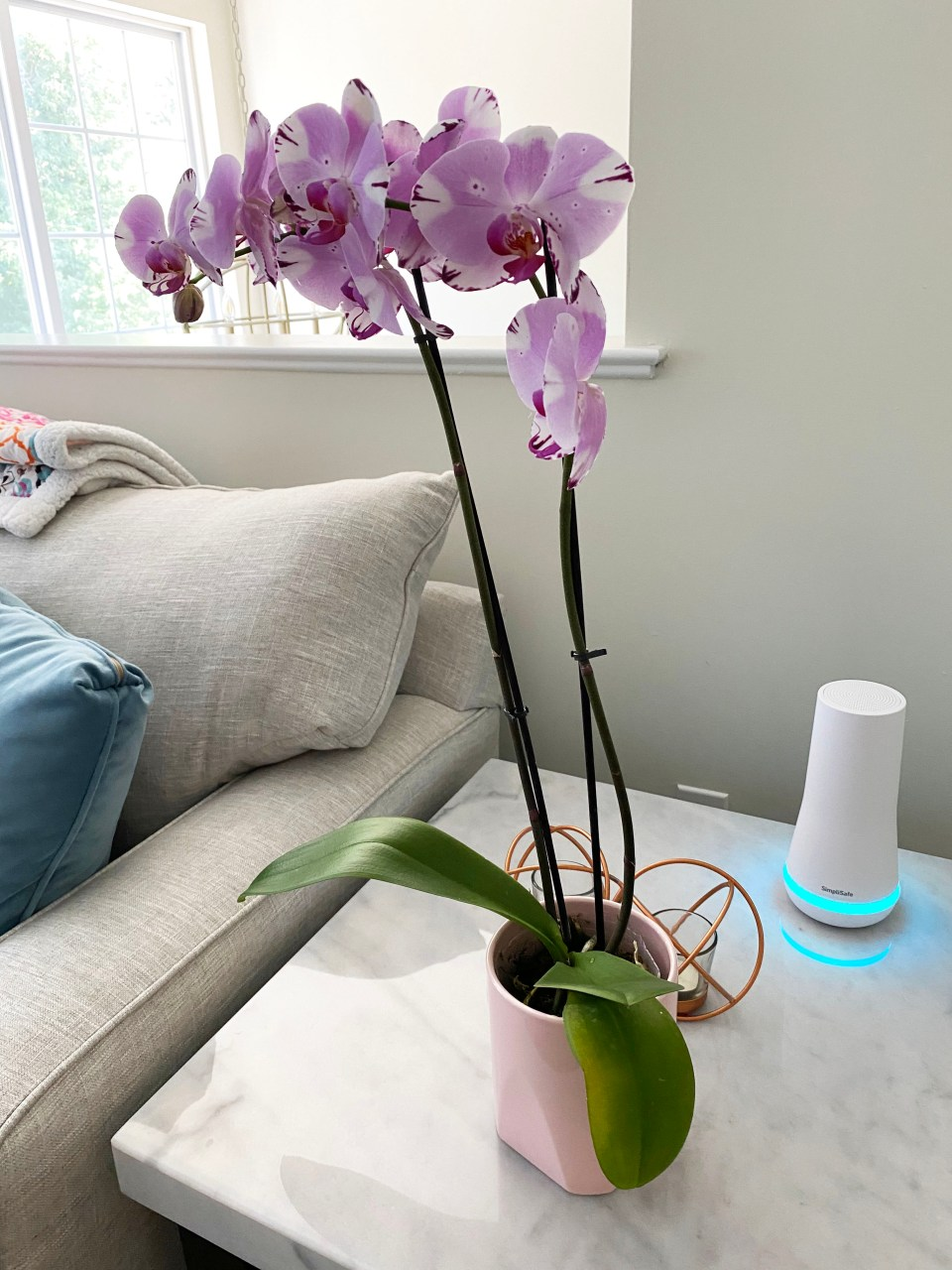 Orchid Care 7
