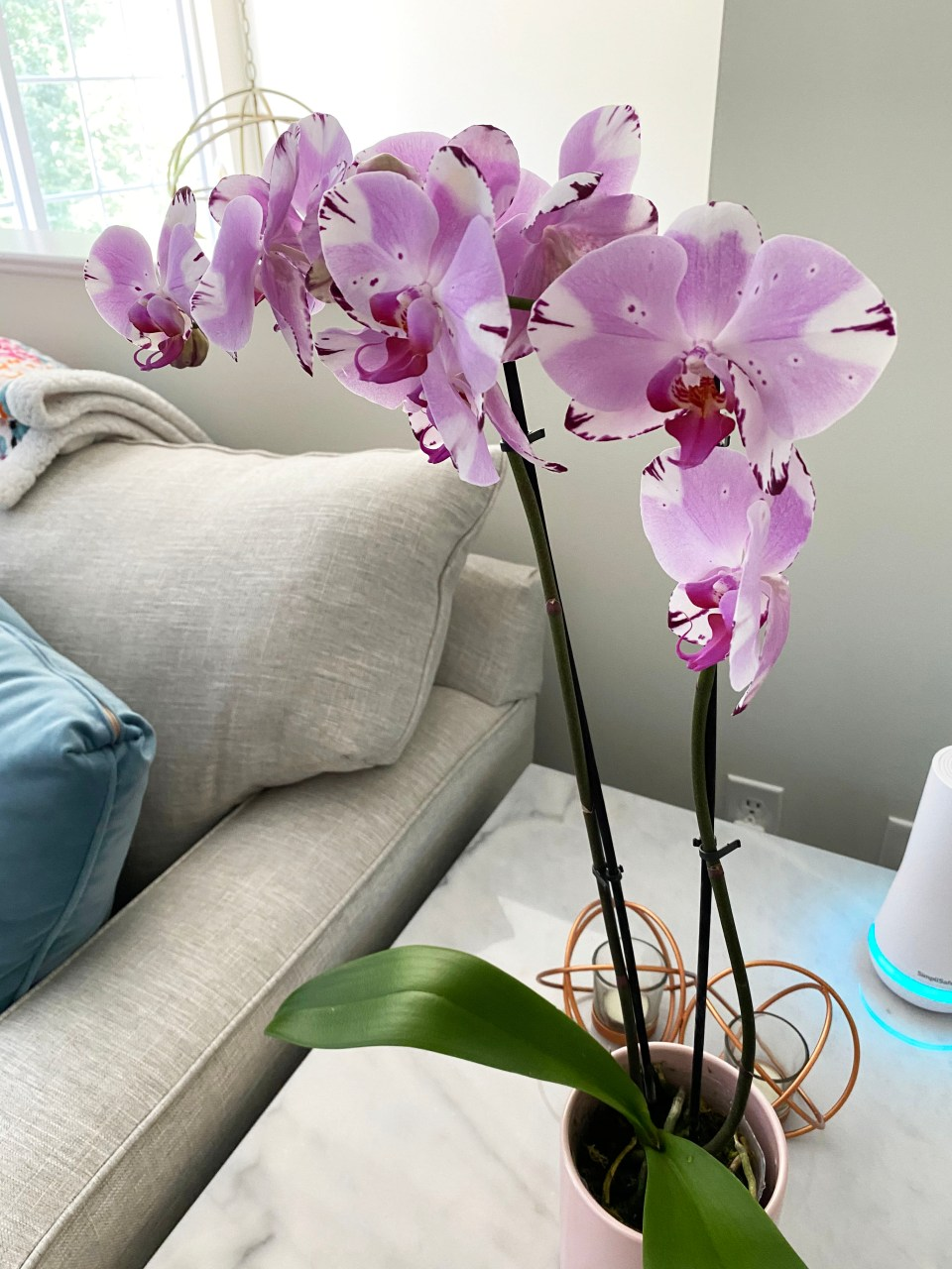 Orchid Care 8