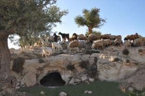 shepherds-field