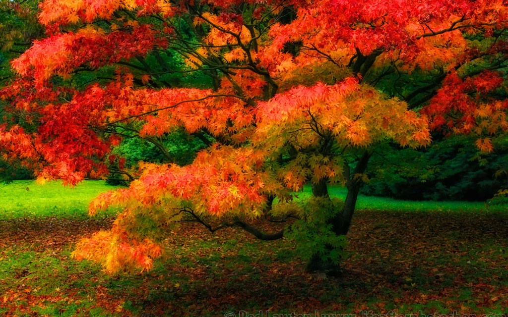 Give your landscapes a mystic glow with the Color Efex Pro Glamour Glow effect