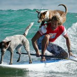 man surfing with 2 dogs
