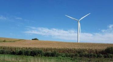 corn-and-wind