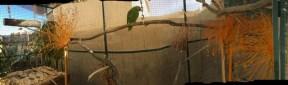 aviary-2_11-14-16