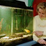 aquarium healthcare